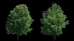 2 blowing on the wind trees isolated with alpha