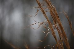 Blowing in the wind. Winter, fine art photography, macro, grey skies, botany, winter grass, hay Stock Image