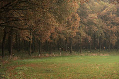 Blowing winds. A photo of trees whereof the leaves get blown away by the wind stock photos