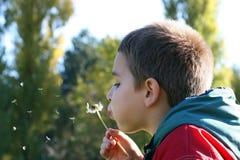 Blown dandelion. A little boy blowing the dandelion Royalty Free Stock Photos