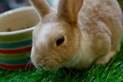 Blown rabbit  in garden Royalty Free Stock Images