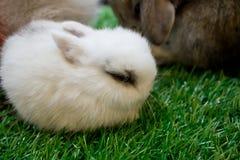 Blown rabbit  in garden Stock Images