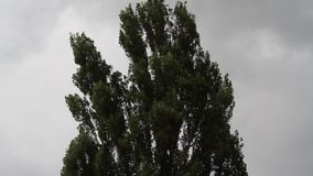 It blows wind and moves trees. It looks like it will rain stock footage