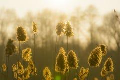 Blowsoms dell'erba asciutta contro il Sun Immagine Stock Libera da Diritti