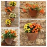 Blütenpflanzen in den Töpfen eingestellt Stockbilder