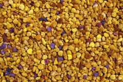 Blütenstaub-Korn-vorgewählter Fokus Lizenzfreies Stockfoto