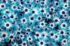 Blått blommar bakgrund Royaltyfria Bilder
