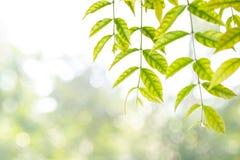 Blätter als Rahmen gegen Naturhintergrund Stockbilder