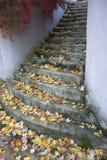 Blätter auf Steinschritten Lizenzfreie Stockbilder