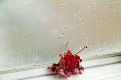 Blätter an einem Fenster Stockfoto