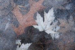 Blätter im Eis Stockbild
