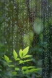 Blätter im Regen Lizenzfreies Stockfoto