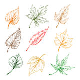 Blätter von Baumskizzenikonen Stockfotografie