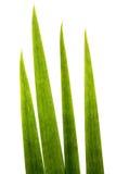 Blätter von Grassupermakro Stockfotografie