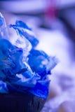 Blu asciughi le foglie del fiore dell'orchidea Immagine Stock Libera da Diritti