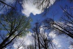 Blu bianco nero esaminare il cielo fotografia stock libera da diritti