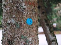 Blu circle sign mark trunk tree close up Stock Photo