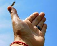Blu comune, Polyommatus Icaro fotografia stock libera da diritti