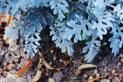 Blu di ghiaccio fotografie stock libere da diritti