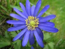blu intenso fotografia stock libera da diritti