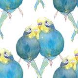 Blu ondulato del pappagallo con un'illustrazione capa gialla dell'acquerello fotografie stock