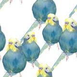 Blu ondulato del pappagallo del modello senza cuciture con una testa gialla watercolo immagine stock libera da diritti