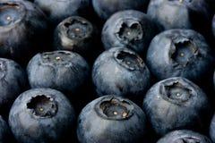 Bluberries fotografie stock
