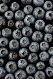 Bluberries fotografia stock libera da diritti