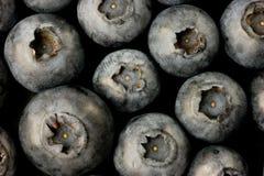 Bluberries immagini stock libere da diritti