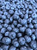 Bluberries Imagen de archivo libre de regalías