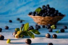 Bluberries dispersados foto de archivo