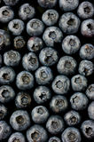 Bluberries Royalty Free Stock Photography