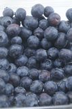 Bluberries Galore. A bunch of freshly picked blueberries Royalty Free Stock Photos