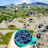 Bluberries in Iceland stock photography