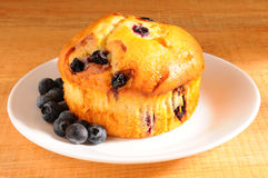 Bluberry Muffin on Plate berries Stock Image