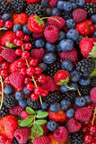 Bluberry, raspberry, blackberry and red currrunt Stock Images