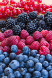 Bluberry, raspberry, blackberry and red currrunt. Colorful stripes Stock Photography