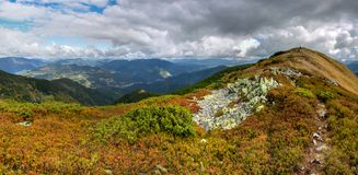 Bluberry thicket. Mountain slopes in autumn in Ukrainian Carpathians Royalty Free Stock Image