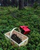 Bluberrys in het hout Stock Afbeelding