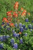 Blubonnets con la brocha india en un campo en primavera Imagen de archivo