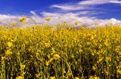Blue-2 jaune Images libres de droits