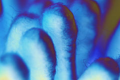 Blue. Cotton swabs with a bue hue stock photos