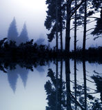 Blue. Relaxing picture of a foggy forest scene stock photo