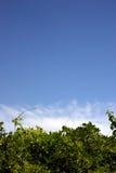 blue 3 zielone white Zdjęcia Royalty Free
