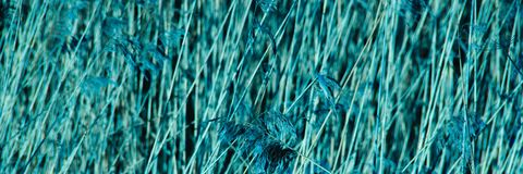 Blue abstract background. cropped dry branches textured natural background. stock photos