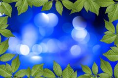 Blue abstract background with plant frame Royalty Free Stock Photography