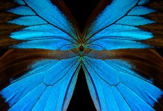 Blue abstract pattern. Wings of the butterfly Ulysses. Closeup. Wings of a butterfly texture background Royalty Free Stock Photos