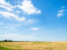 Free Blue Afternoon Sky Over Yellow Wheat Field Royalty Free Stock Photos - 154080408
