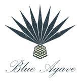 Blue agave logo. Vector design. Blue agave vector. Grange illustration for logos or emblems Royalty Free Stock Photos