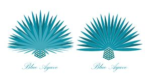 Blue agave or or tequila agave plant. Vector illustration set. Blue agave or or tequila agave plant Stock Image